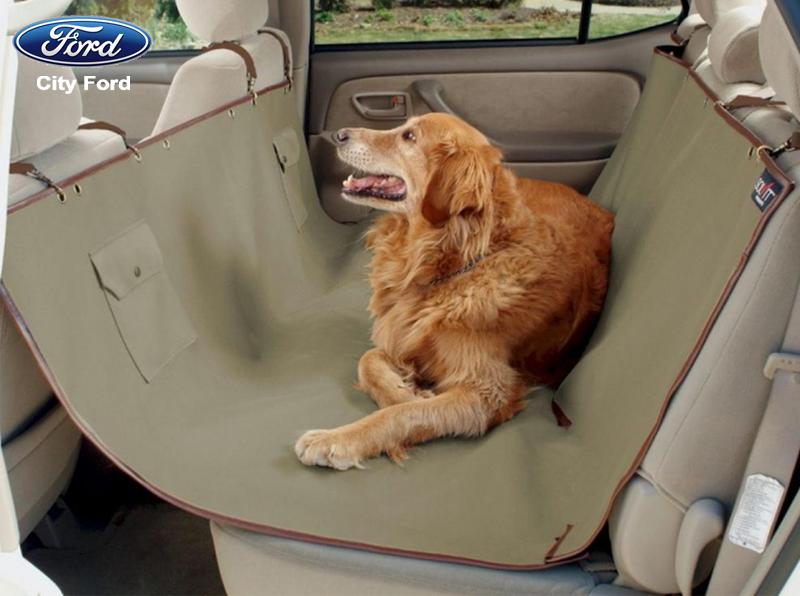 Mang theo một tấm đệm để hạn chế lông thú cưng bám trên xe